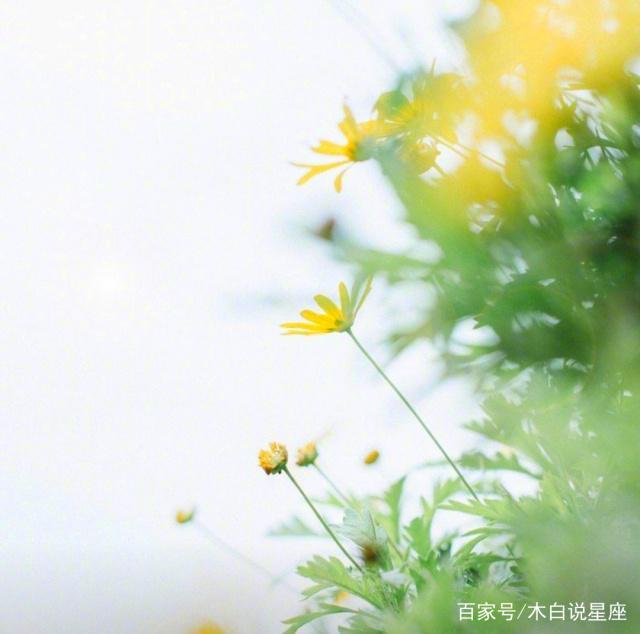 金牛座:往后余生愿日子清净,抬头遇见的都是柔情