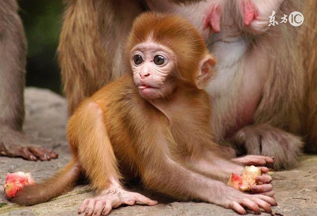 属猴人,7月2号到来之后,你的运势会有哪些变化?了解一下